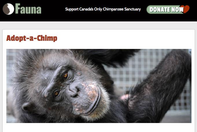 Acquisio Cares Organization, The Fauna Foundation