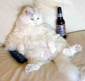 lazy_cat